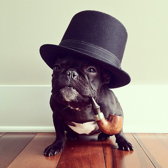 little-dog-pug-in-hat-smoking-a-pipe